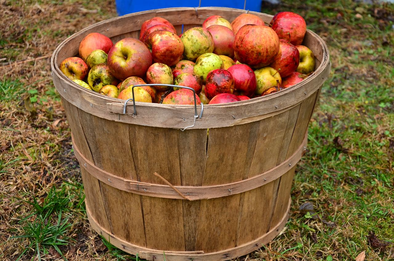 a basket full of apples