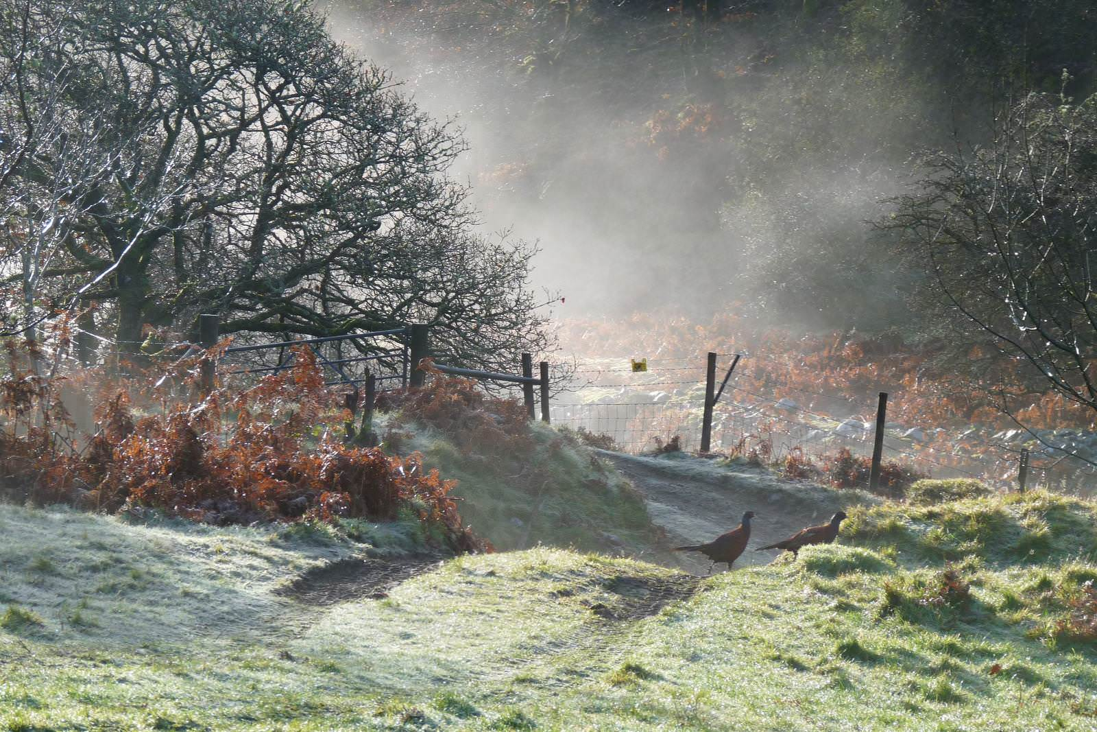 A frosty Quantock morning