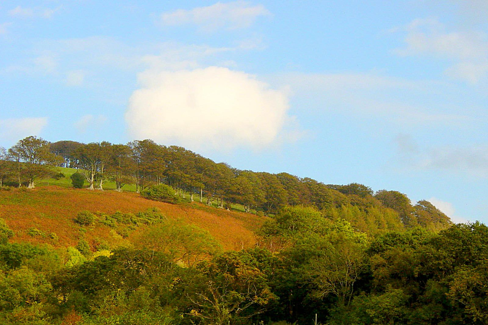 Long Combe on the Quantock Hills