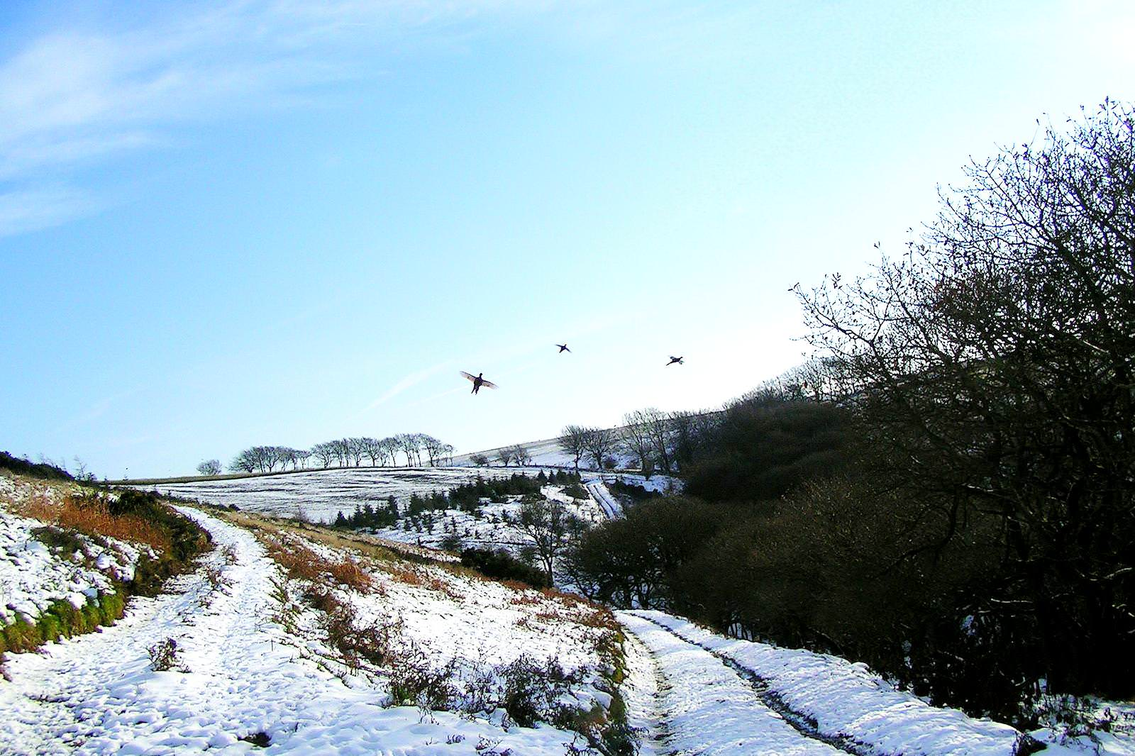 A Quantock lane in the snow
